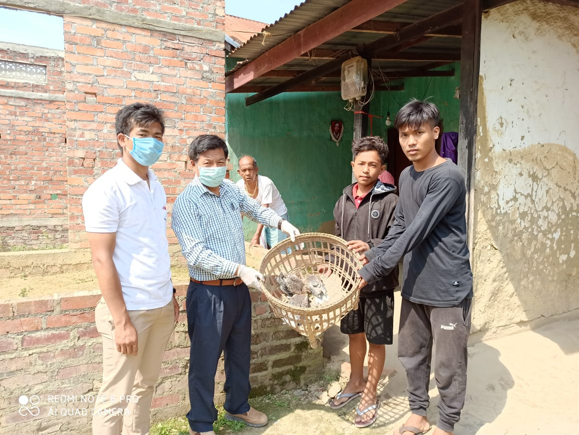 Three black-shouldered Kites released