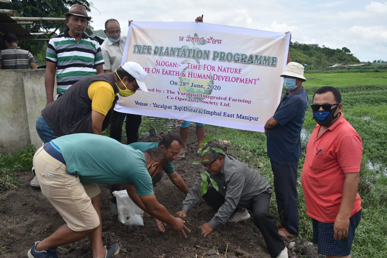 Tree plantation held at Yaralpat