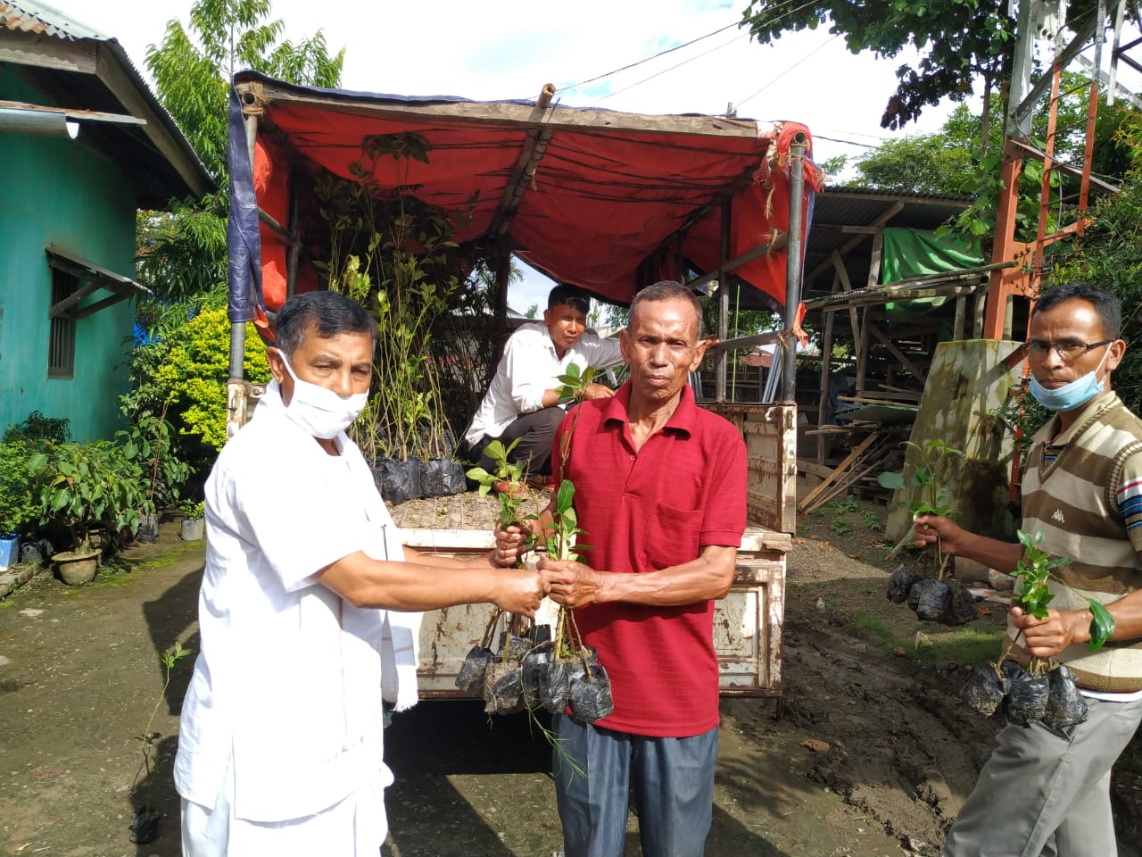Tree saplings distributed