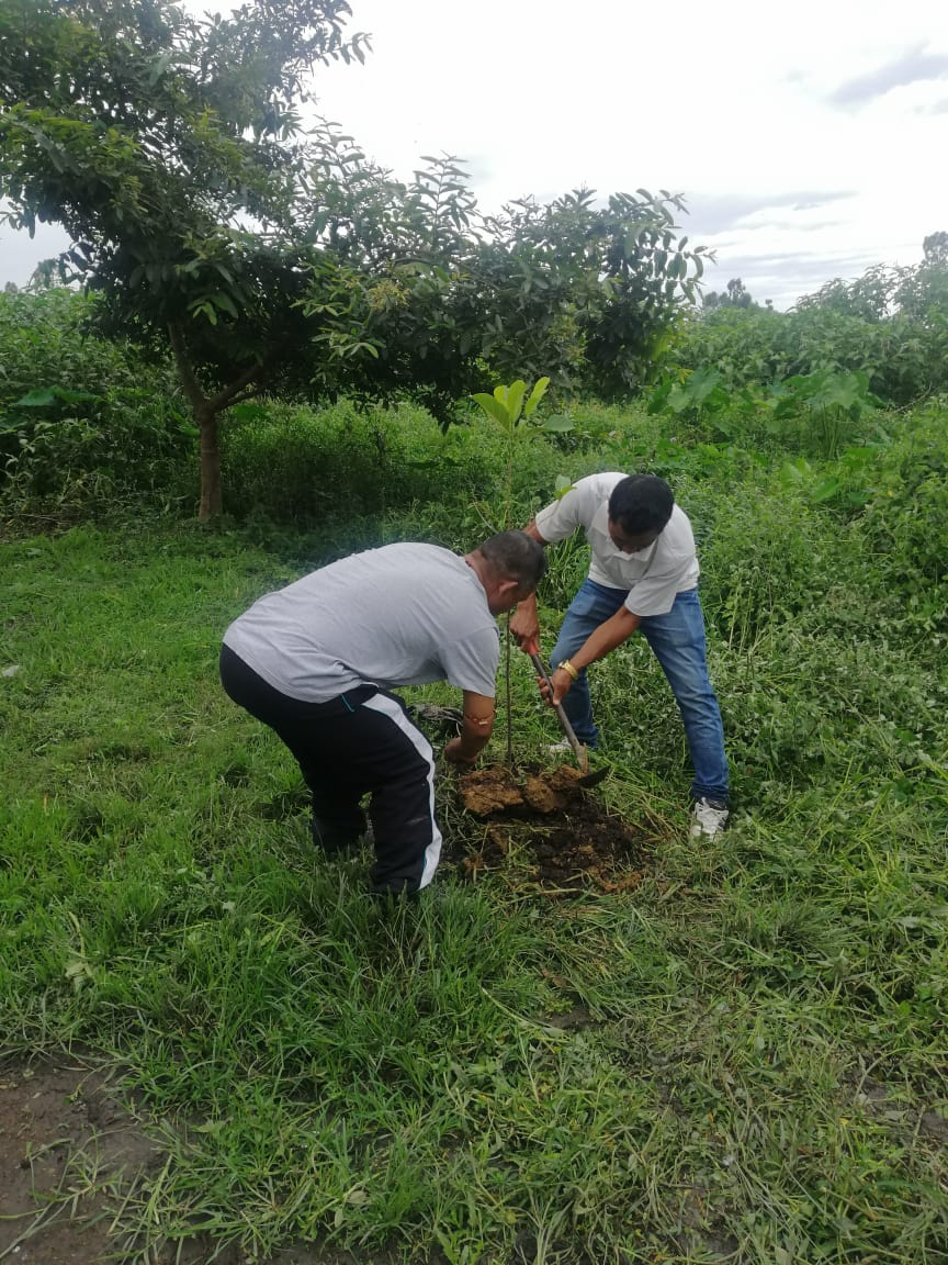 Cleanliness cum tree saplings plantation drive conducted