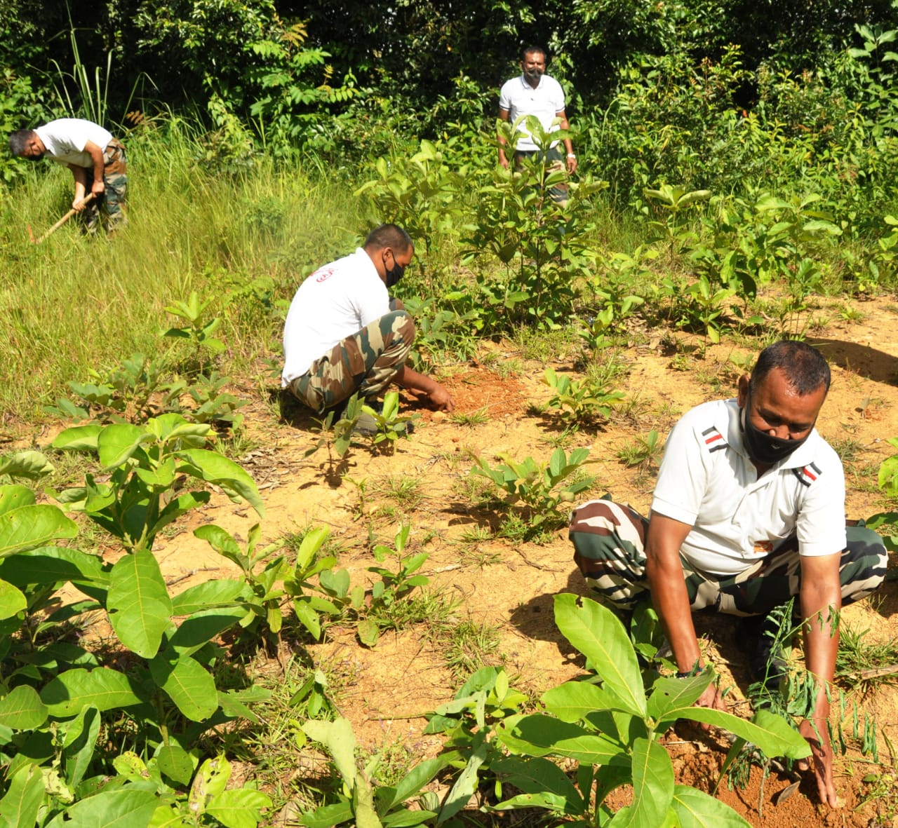 Assam Rifles organised tree plantation drive