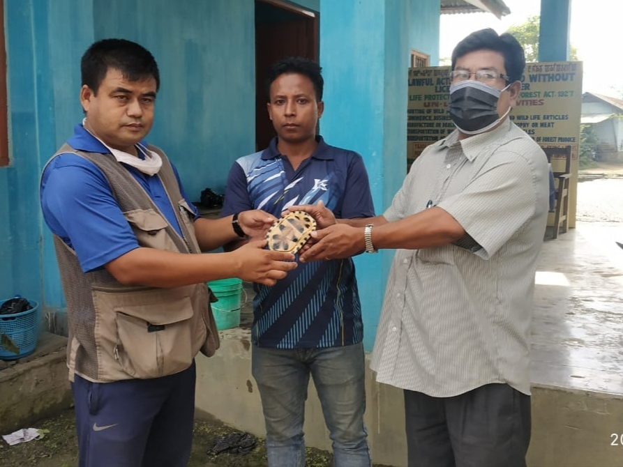 Turtle saved, later handed over